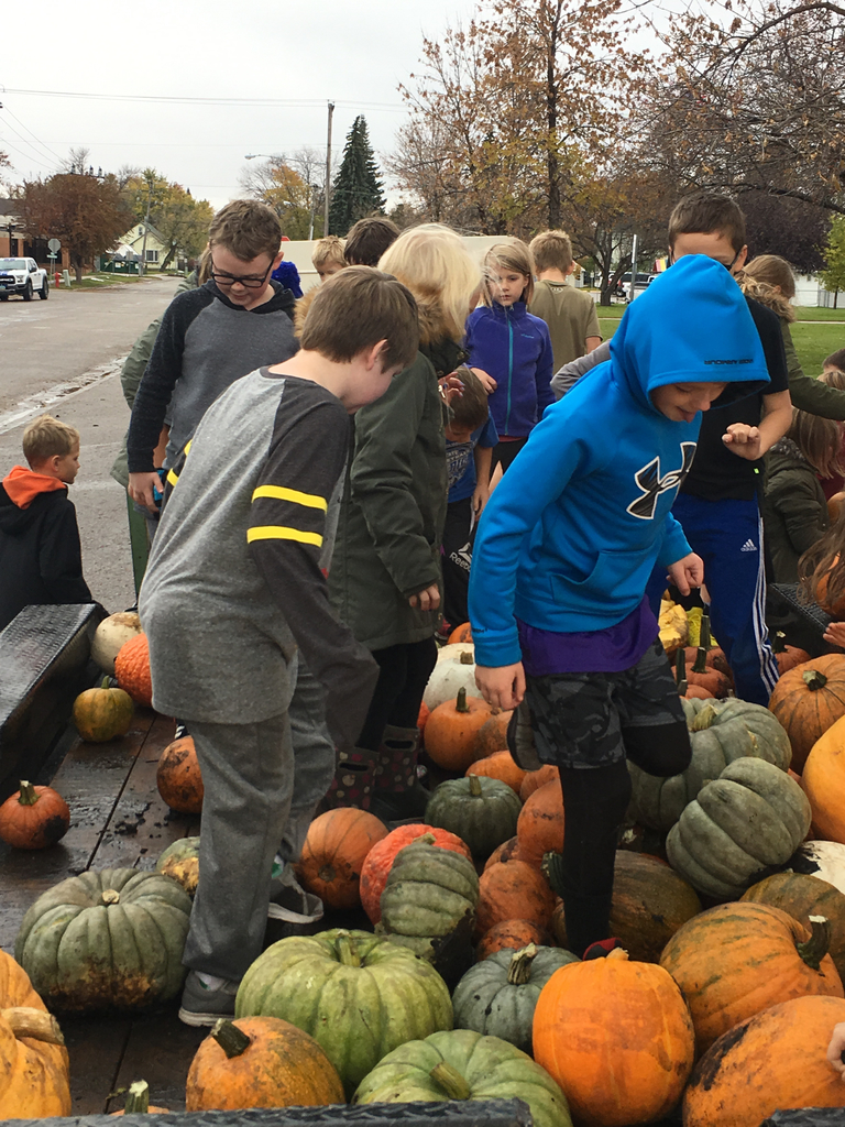 "Looking for the ""perfect"" pumpkin."